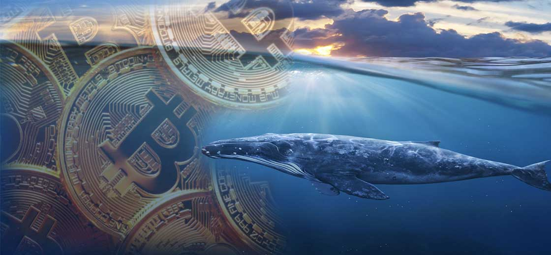 Whale Alert Detected the Activation of a Bitcoin Wallet After 9-Years of Slumber