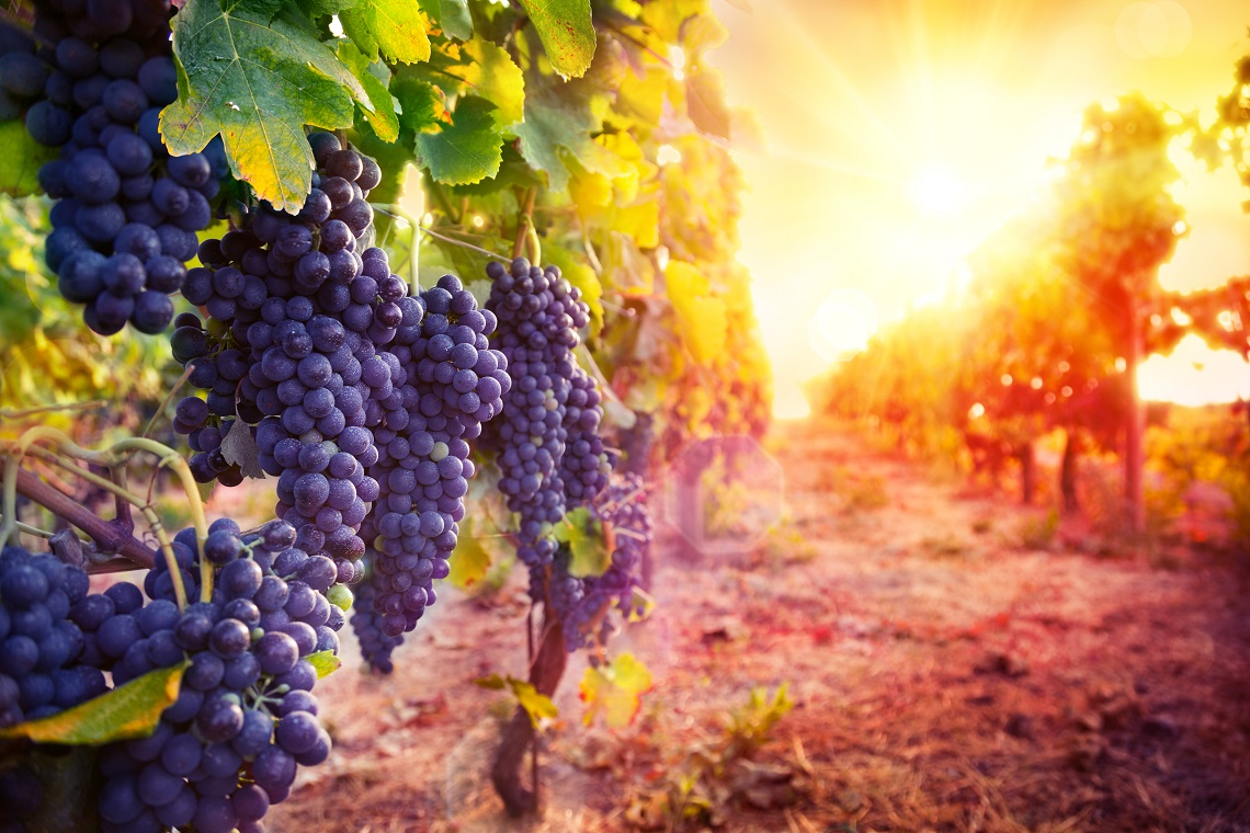 Wine Australia's tools to help producers connect with trade - The Shout