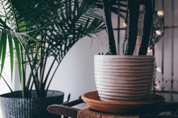10 Benefits of Having Plants in the House