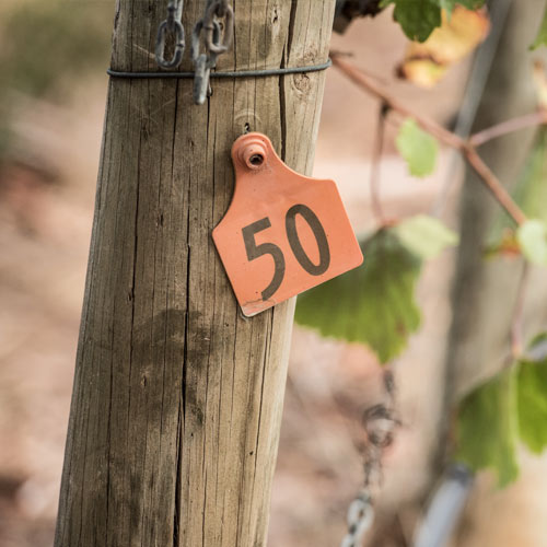 Vineyard post at Hahndorf Hill