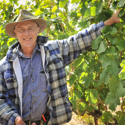 Hahndorf Hill's Larry Jacobs in his Gruner Veltliner vineyard
