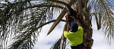 Affordable Arborist in Auckland at Tree Specs