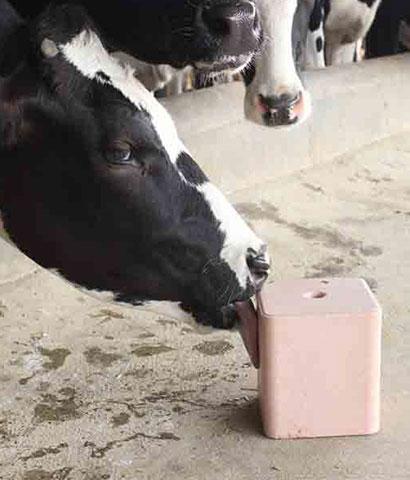 Best Salt lick block for Animals | Hub Salt