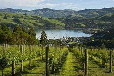 Best Vineyards in New Zealand