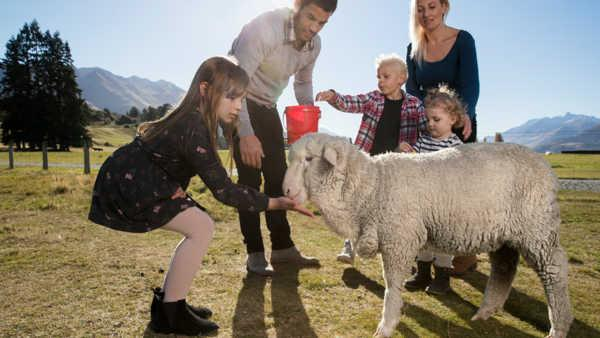 Farm Experience in NZ