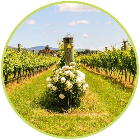 Get Vineyard Management Software in Wellington