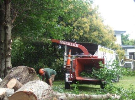 Here Arborist Matamata at Appropriate Cost