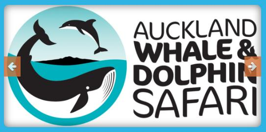 Refresh Your Kid's Mood with Auckland Whale & Dolphin Safaris