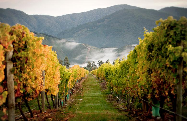 Tips for Visiting the Marlborough Wineries in New Zealand
