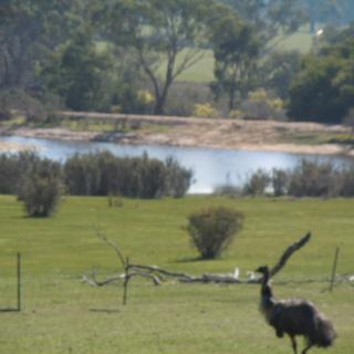 Grampians Old Man Emu Stay