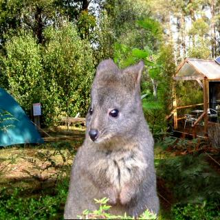 Huon Bush Tipis and Camping