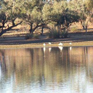Quilpie Lake Outback Accommodation