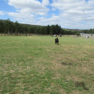 Midlands Pet Friendly Camping