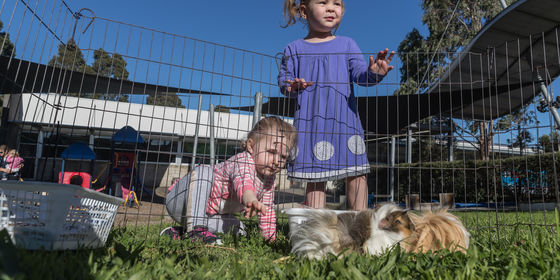 Children looking at guinea pigs in pen