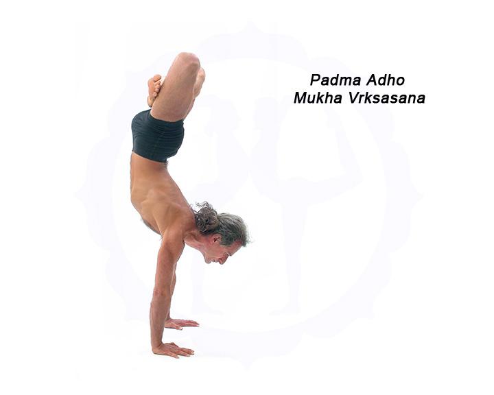 Simon Borg-Olivier in Padma Adho Mukha Vrksasana
