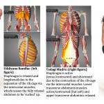 Udiyana bandha Tadagi mudra anatomy montage