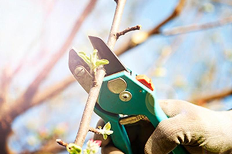 Routine Inspection Guide - pruning