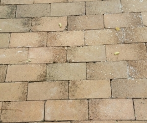 BRICKS 'COMMONS' USED AS PAVERS SO IN GOOD COND. APPROX. 50 SQ MTRS. PICK UP PENNANT HILLS 2120