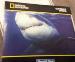 Shark DVD - Free post