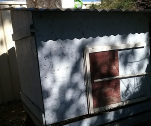 FREE Chicken/Chook Coop - Shed/Pen-  ! Pick up Richmond NSW