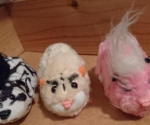 Zuzu pet toys