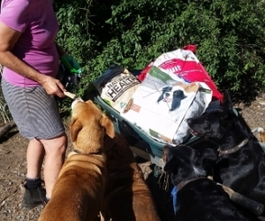 Donations for rescued animal sanctuary