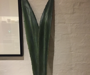 Large fake cactus leaves