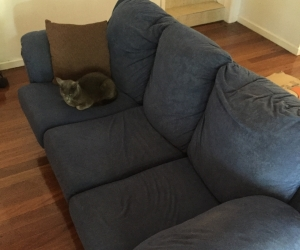 3 seater couch (cat and batteries not included)