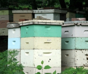 Bee Hive and equipment