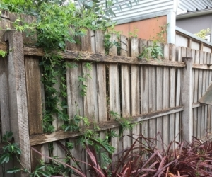 Timber fence palings
