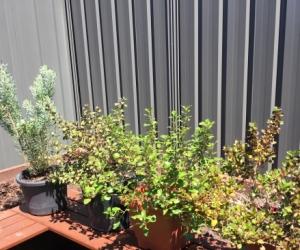 Plants - 4