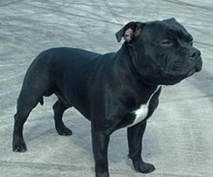 Dog Kennel needed