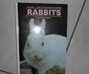 rabbit book