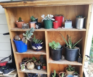 Shelf only plants not included
