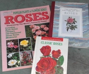 Rose Books - Croydon
