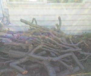 Apple tree wood