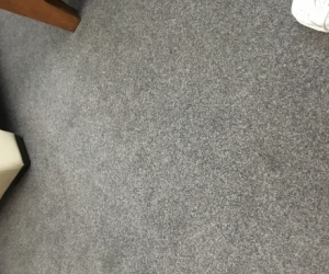 Free carpet brand new same as pictured.
