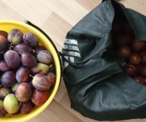 Organic plums