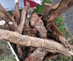GONE NOT Available Free cut firewood