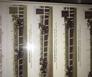 Pharlap print - memorabilia