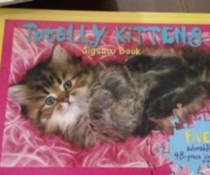 Kitten jigsaw book