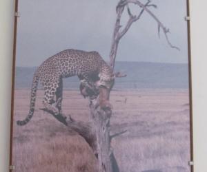 Framed wild-life photo