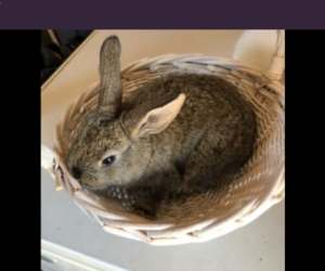 Pet rabbits ( or mice ) and maybe a hutch