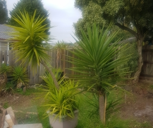 Free Plants between 4 and 7ft tall - 6 available